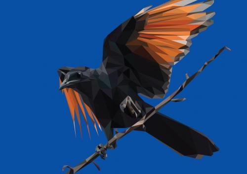 New-bird